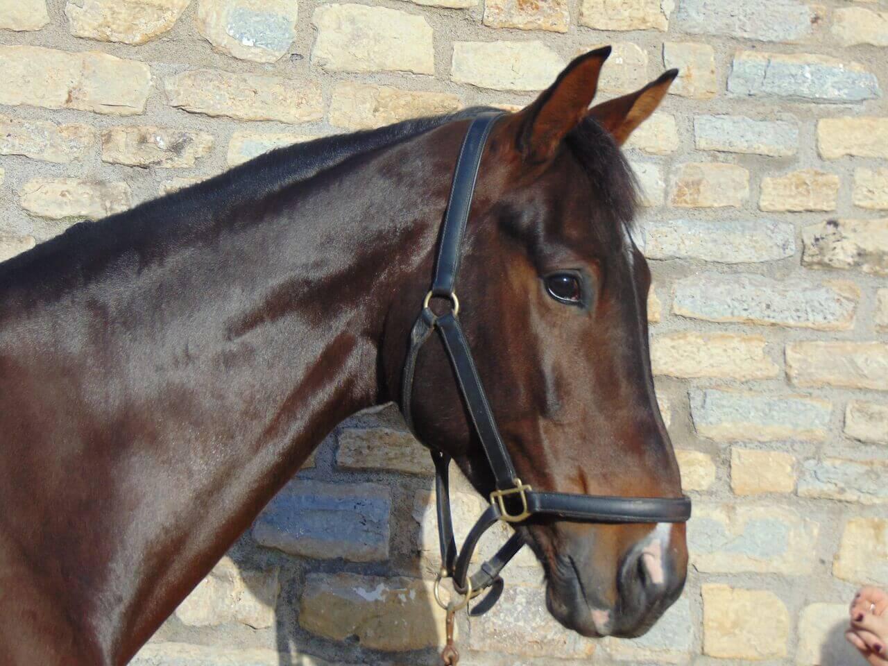 Enzo (Enzo IV)